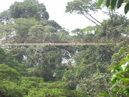 Combo Canopy & Hanging bridges in Arenal