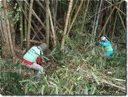 竹の伐採作業(南相馬号)