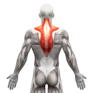 back muscle group exercises