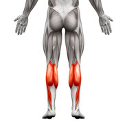 lower leg muscle group exercises