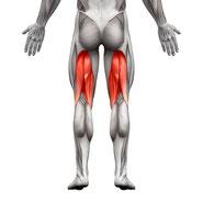 upper leg muscle group exercises