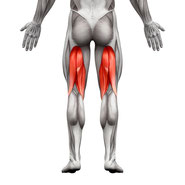 upper leg muscle group exercises