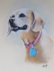 color dog portrait in chalk pastel