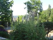 decouverte-jardin-dordogne