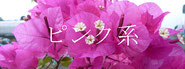 ピンク品種