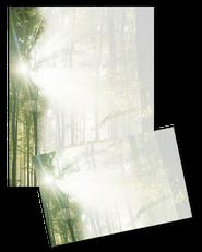 Motiv: Wald