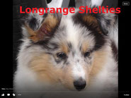 Visit Longrange Shelties Website