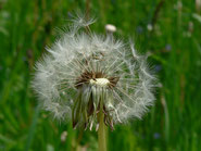 Auch nach dem Tod von Hans-Peter Dürr werden seine Gedanken noch lange Samen tragen