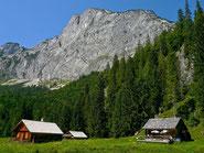 Zimitzalm unter der Reichenstein-Südwand