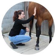 La magnétiseuse magnétise tout le corps du cheval.