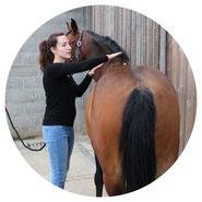 Magnétiseuse avec le cheval bai. La magnétiseuse effectue un nettoyage énergétique global du cheval.