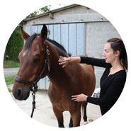 La séance de magnétisme équin se termine par une harmonisation globale des corps énergétiques du cheval.
