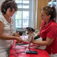 Hat Ihr Hund den richtigen Blutdruck? Wir untersuchen direkt in Brunn a. G. den Tier-Kreislauf.