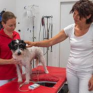 Untersuchung mittels EKG ohne Schmerzen in der Tierarzt-Ordination in Brunn am Gebirge