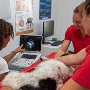 Das Ultraschallbild des Hundes gibt genaue Auskunft über Herzprobleme und Herzbeschwerden, auch ein angeborener herzfehler wird sichtbar