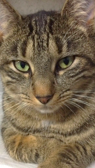 Mini gatto
