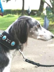 Windhund mit Lederhalsband in schwarz mit Perlen Bolleband