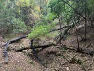 ▲台風で倒れた木も残っていました