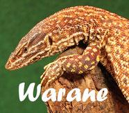 lnk_warane
