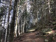 Immer wieder Wald