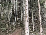 ursprüngliche Waldwege