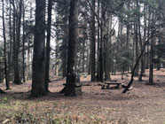 Wald im Pohorje mit Madonna