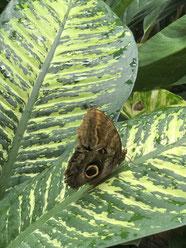 Auszeit im Schmetterlingshaus