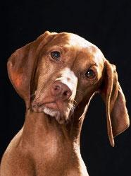 Hundeportrait, Foto (Ausschnitt): © DoraZett, Fotalia