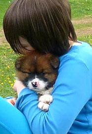 Servicehund für Kinder Therapie, Schule, Assistenz, Diabetikerwarnhund