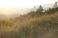 Provence Img 2505