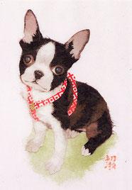 和紙貼り絵・動物似顔絵・犬・ボストンテリア