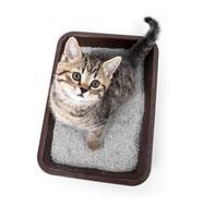 Katzenstreu / Hygieneartikel