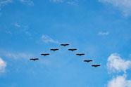 Vogelflug in Formation
