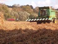 Mais grain 2013