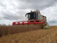 Moisson de blé (3) 2013