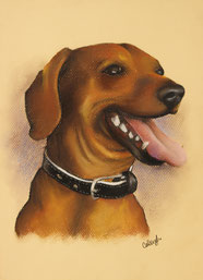 a dog drawing in pastel on tan paper