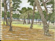 ②20/2月 横浜金沢海浜公園 ここは八景島に隣接する漁港と砂浜があった場所で今では珍しくなった海辺の松林が残っている。
