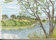 21/11埼玉北川辺町:渡良瀬川 遊水地近くから利根川に合流するまでのゆったりとした流れ