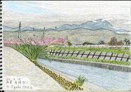 ③24/4滋賀虎姫:伊吹山 JR北陸本線-虎姫駅北東側の田川沿いに桜と伊吹山が見える