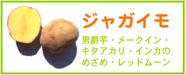 ジャガイモ レシピ