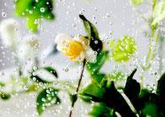 3.気泡《茶の花》 [1201_1406] 2017年 ラムダプリント (ed.1/1) 204 × 289 mm