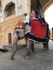 olifantentoerisme india