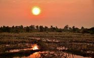 Sonnenuntergang über Reisfelder