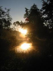 Sonnenaufgang im Waldviertel