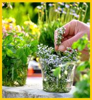 Plantas medicinales Fitoterapia Herbolario Alquimista Arrecife Lanzarote