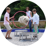 Kinder haben Spaß mit Hunden