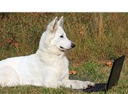 Conseils de soins avec l'aloé véra de LR pour les animaux: chevaux, chien, chats, rongeurs, hamster