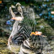 Ingo Hamann, ingos-fotos, 15 tipps für die zoofotografie