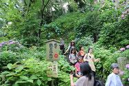 長谷寺境内の斜面に作られたアジサイの径の降り口。祐希を連れてこの道を歩くのはまだ無理。