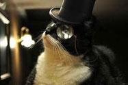 chat européen noir et blanc avec chapeau haut de forme et monocle